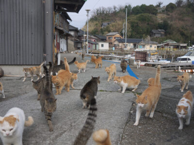Herding Cats, How to Sell With Multiple Owners
